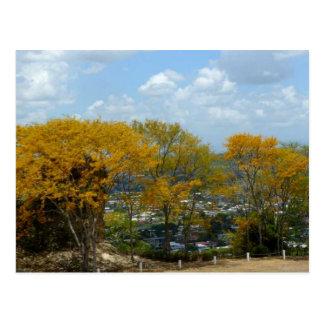Árboles amarillos de Poui en la colina de San Tarjetas Postales