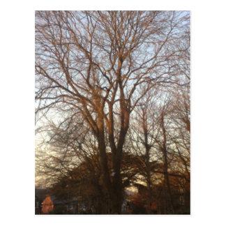 árboles antes de la puesta del sol tarjeta postal