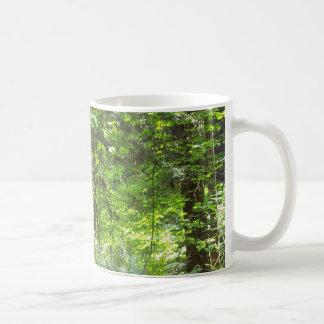 Árboles, árboles taza