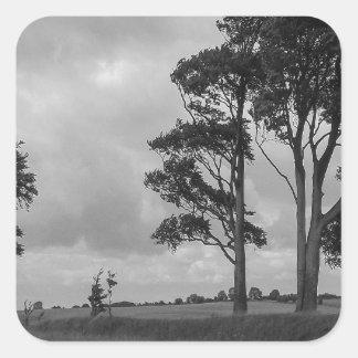 Árboles azotados por el viento pegatina cuadrada