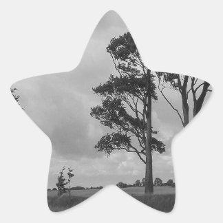 Árboles azotados por el viento pegatina en forma de estrella