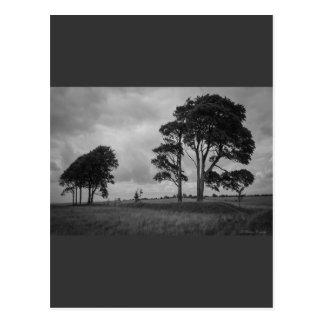 Árboles azotados por el viento tarjetas postales
