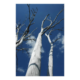 Árboles blancos contra el cielo azul fotografia