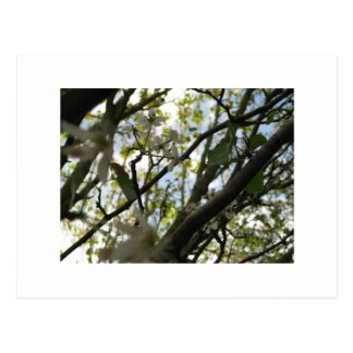Árboles blancos tarjetas postales