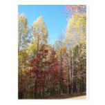 Árboles bonitos del otoño postal