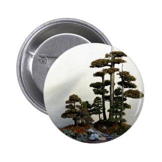 Árboles chinos de los bonsais del enebro pins