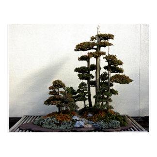 Árboles chinos de los bonsais del enebro postales