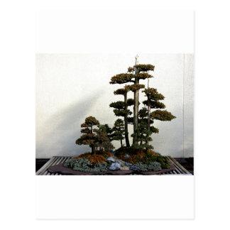 Árboles chinos de los bonsais del enebro tarjetas postales