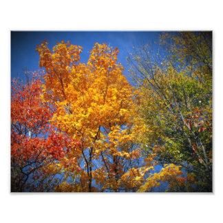 Árboles coloridos del otoño cojinete
