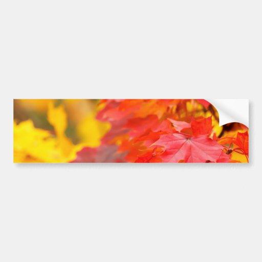 Árboles con las hojas del naranja y del amarillo e pegatina de parachoque