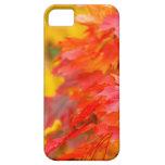 Árboles con las hojas del naranja y del amarillo e iPhone 5 Case-Mate cárcasa