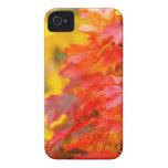 Árboles con las hojas del naranja y del amarillo e iPhone 4 Case-Mate coberturas