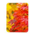 Árboles con las hojas del naranja y del amarillo e iman rectangular