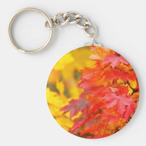Árboles con las hojas del naranja y del amarillo e llaveros personalizados