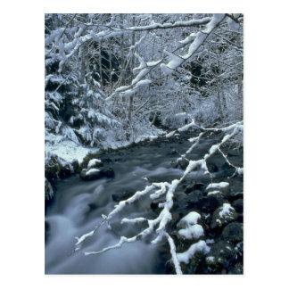 Árboles congelados postal
