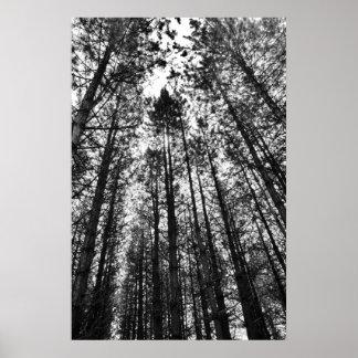 Árboles convergentes poster