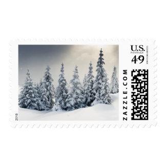 Árboles cubiertos con escarcha y nieve envio
