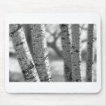 Árboles de abedul blanco de Colorado en blanco y n Alfombrilla De Raton
