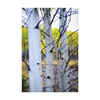 Árboles de abedul de Colorado Lona Envuelta Para Galerías