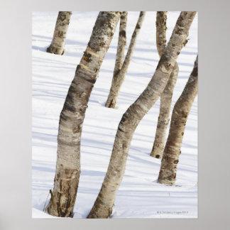 Árboles de abedul de plata en paisaje nevoso posters