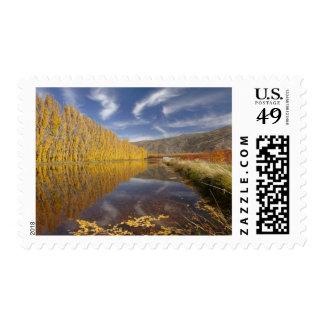 Árboles de álamo y presa de la irrigación en sello