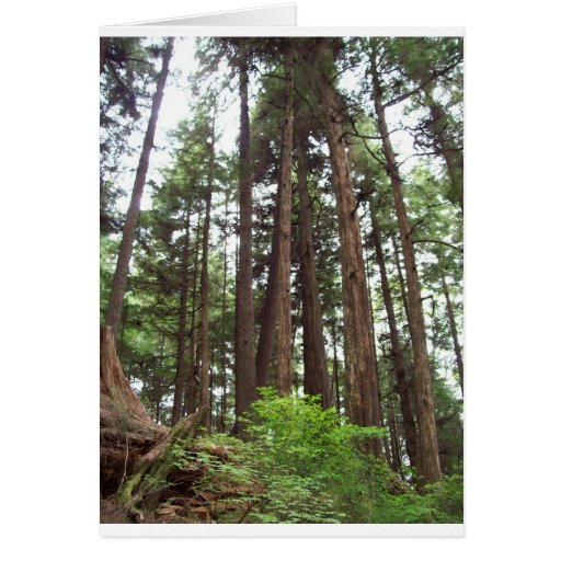 Árboles de Alaska Tarjetón