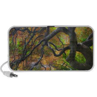 Árboles de arce del color del otoño, Victoria, Bri Mp3 Altavoces