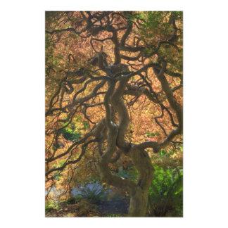 Árboles de arce del color del otoño Victoria bri Arte Fotográfico