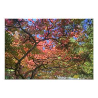 Árboles de arce del color del otoño, Victoria, Bri Foto