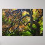 Árboles de arce del color del otoño, Victoria, Bri Póster