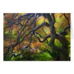 Árboles de arce del color del otoño, Victoria, Bri Tarjetas