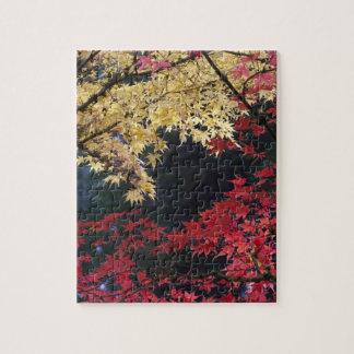 Árboles de arce en color del otoño rompecabeza