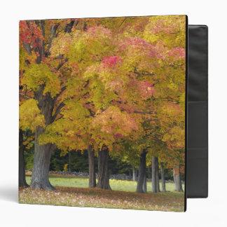 Árboles de arce en colores del otoño, cerca de la