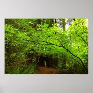 Árboles de arce en la impresión del poster del bos