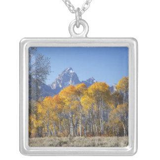 Árboles de Aspen con la cordillera 4 de Teton Colgante Cuadrado