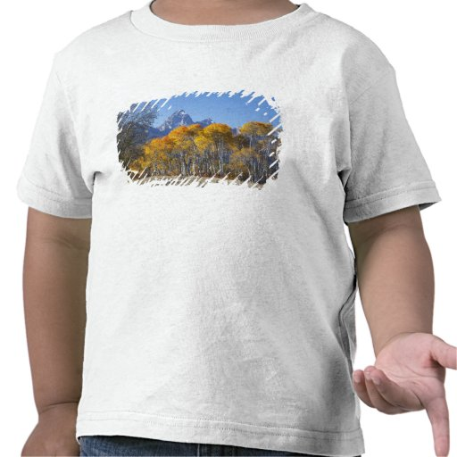 Árboles de Aspen con la cordillera 4 de Teton Camisetas