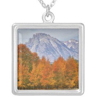 Árboles de Aspen con la cordillera 5 de Teton Colgante Cuadrado