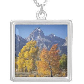 Árboles de Aspen con la cordillera 6 de Teton Colgante Cuadrado