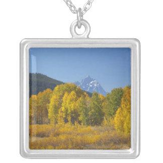 Árboles de Aspen con la cordillera 7 de Teton Colgante Cuadrado