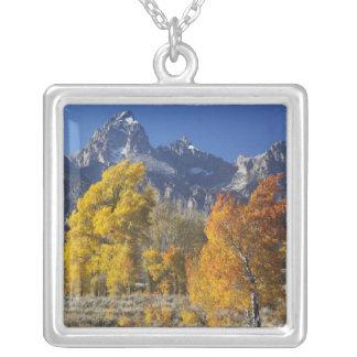 Árboles de Aspen con la cordillera de Teton Colgante Cuadrado