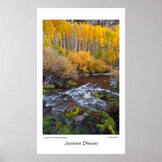 Árboles de Aspen de la caída de Colorado Póster