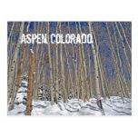 Árboles de Aspen del invierno en Aspen, Colorado Postal