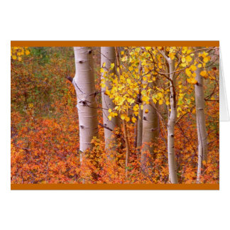 Árboles de Aspen en otoño Tarjeta