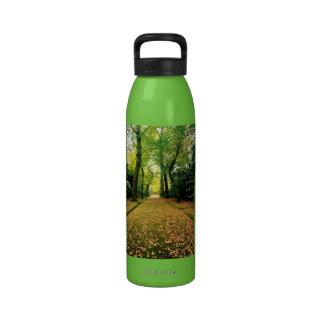 Árboles de Biloba del Ginkgo Botallas De Agua