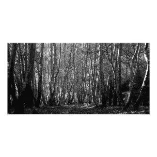 Árboles de BW Plantilla Para Tarjeta De Foto