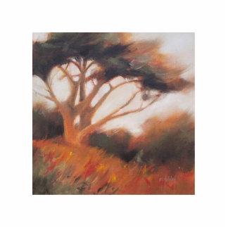 Árboles de California Monterey Cypress Esculturas Fotográficas