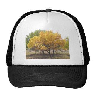 Árboles de Colorado del parque de estado de Cherry Gorro De Camionero