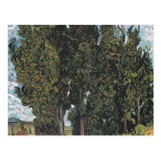 Árboles de Cypress de Van Gogh Tarjetas Postales