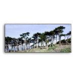 Árboles de Cypress en el parque de Sutro, San Fran