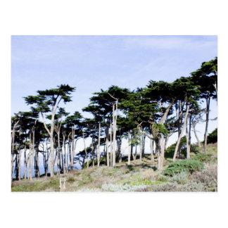 Árboles de Cypress en el parque de Sutro San Fran